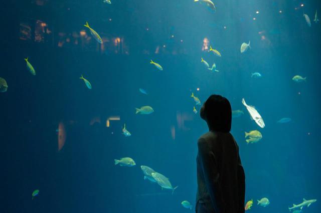 画像2: 四国ならではの水族館で、四国の水景美と生命の神秘に触れる