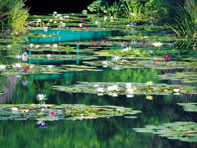 画像3: 【高知県】世界的名画の実写版!『北川村「モネの庭」マルモッタン』