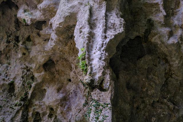 画像: 上部から垂れ下がる鍾乳石の中を通った水が2つの壺に溜まります。数週間前に降った雨がろ過され、一滴一滴と落ちたもの。