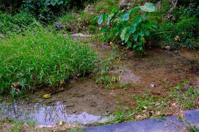 画像: 隣同士にある2つの泉を合わせて呼ばれており、琉球の稲作発祥伝説が残ります。美しい水が湧き出る場所で、小さな田んぼ、御穂田(みふーだ)があります。