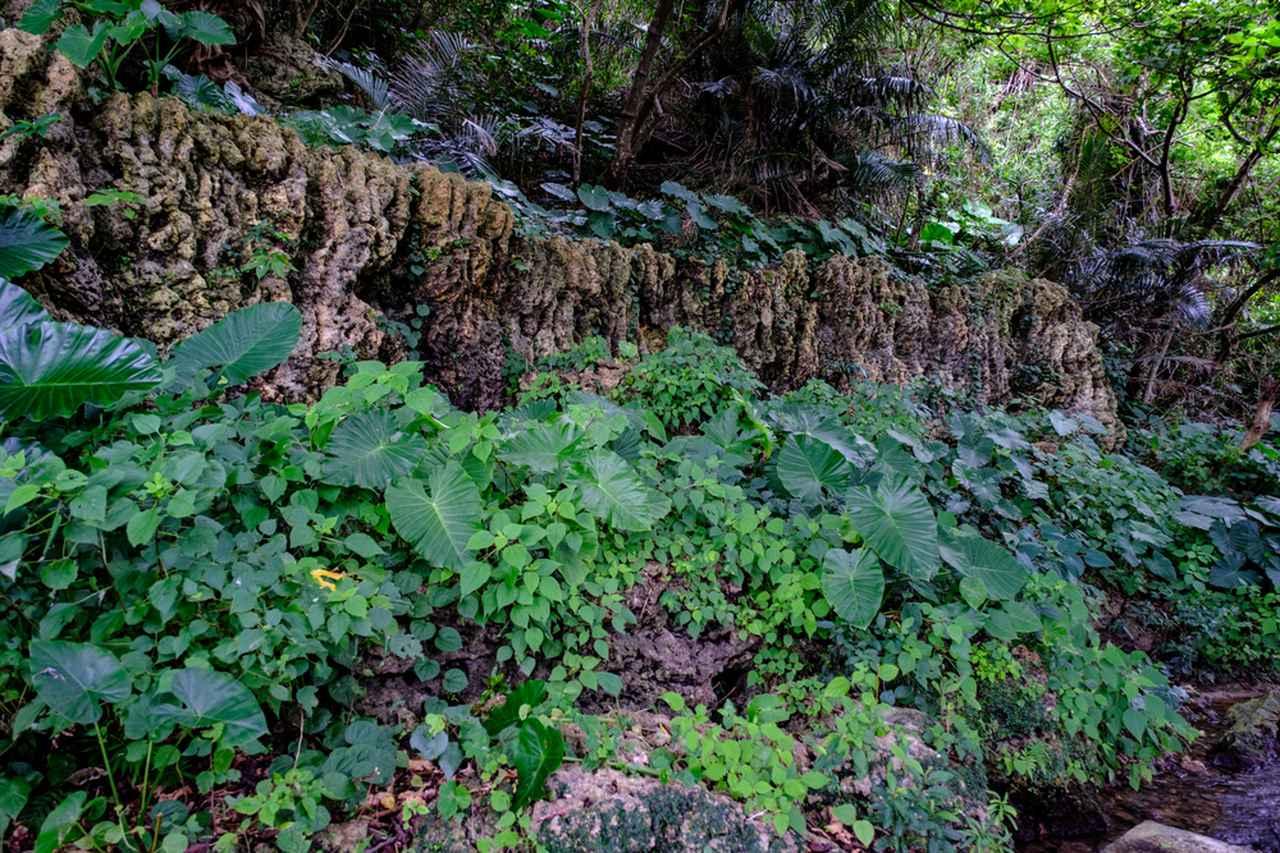 画像: 受水走水は清澄な空気を感じる場所。水流が造り出したゴツゴツとした岩肌も見ごたえありました。