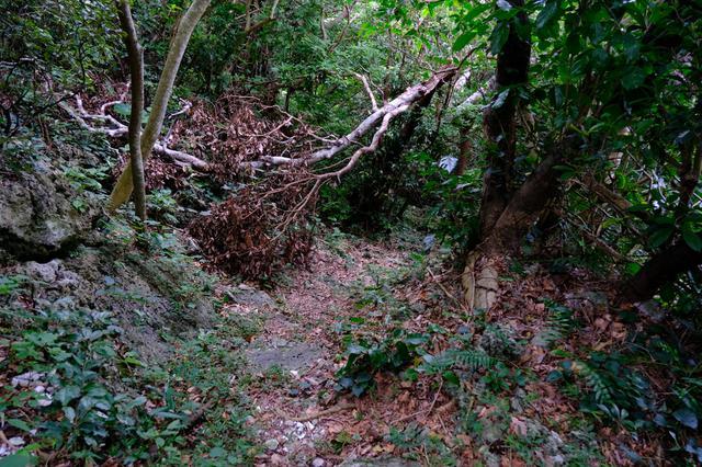 画像: 道があるような無いような…山道。海抜70m地点から、山道を下りおります。しっかりした靴でないと危ないです。
