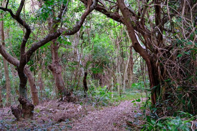 画像: 琉球神話の神・アマミキヨが創った御嶽と言われています。鬱蒼とした森は「ヤブサツの浦原(うらばる)」と呼ばれています。