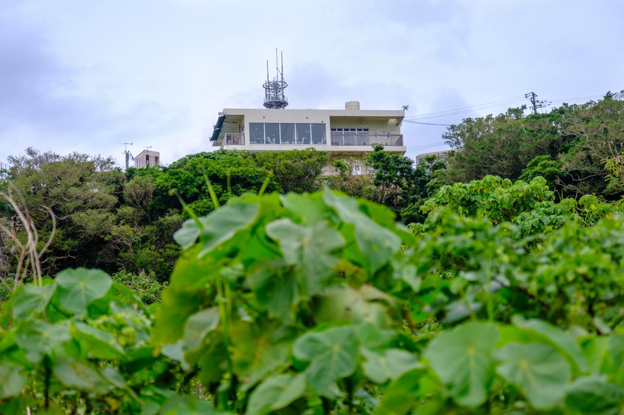 画像: スタート地点だった「Cafeやぶさち」が山の上に見えました。