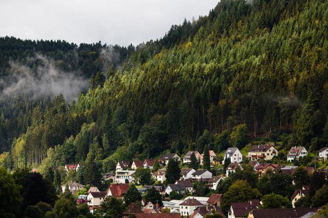 画像: 黒い森がイメージ。ドイツの「シュヴァルツヴェルダー・キルシュトルテ」