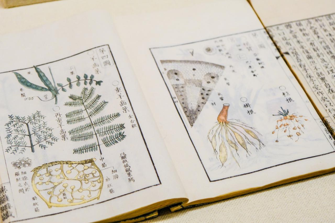 画像: 宇田川榕菴の植物学書。繊細な手描きの絵に基づく木版刷りの図。