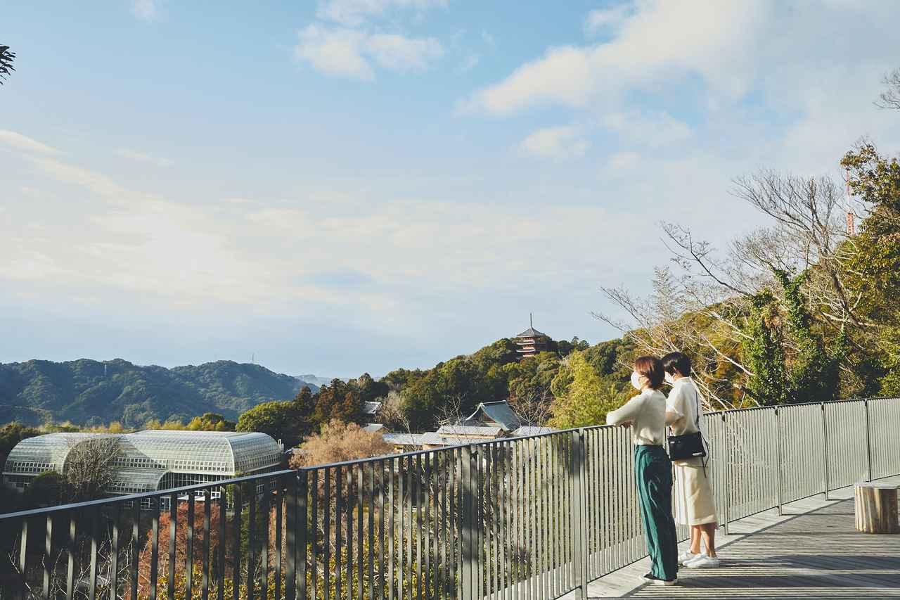 画像1: 四季折々の自然に囲まれた、広大な「牧野植物園」を旅気分で朝散歩