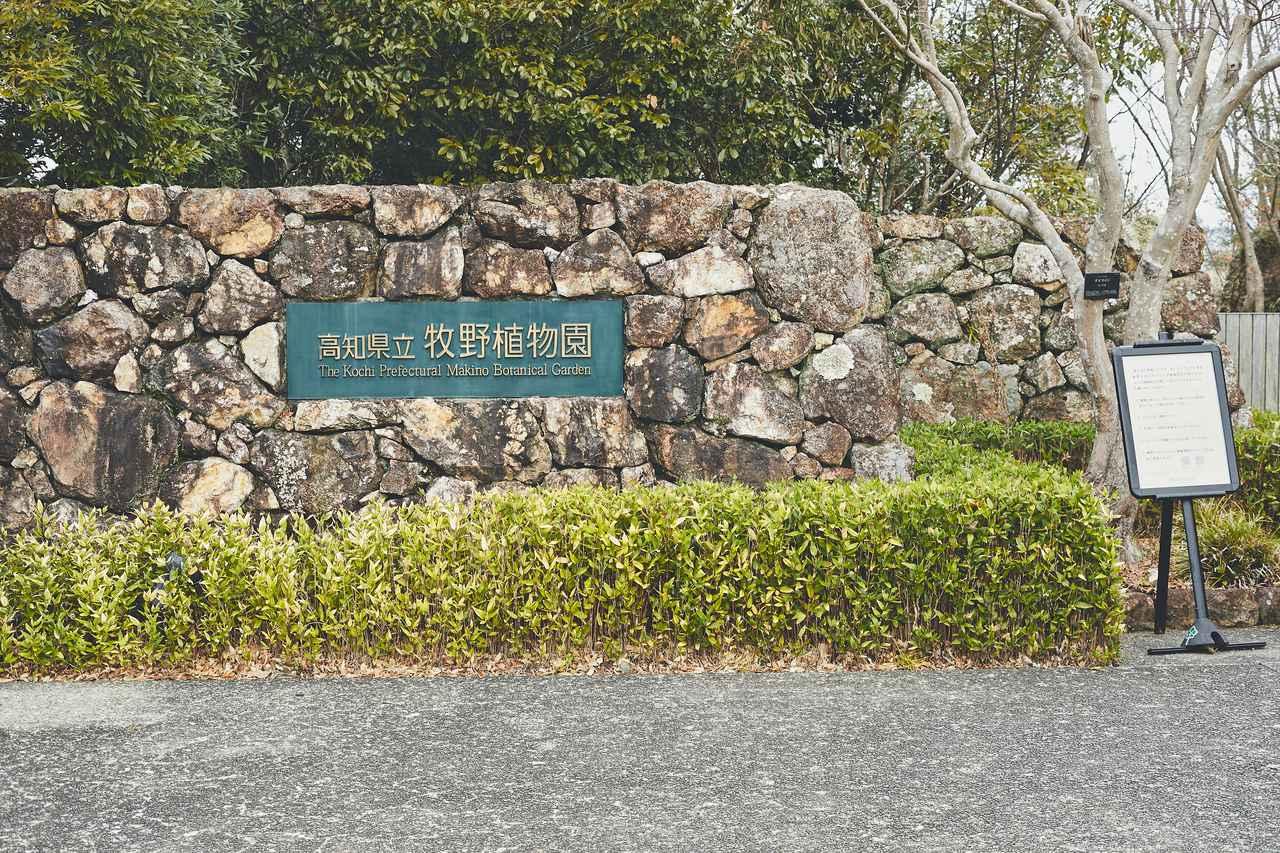 画像2: 四季折々の自然に囲まれた、広大な「牧野植物園」を旅気分で朝散歩