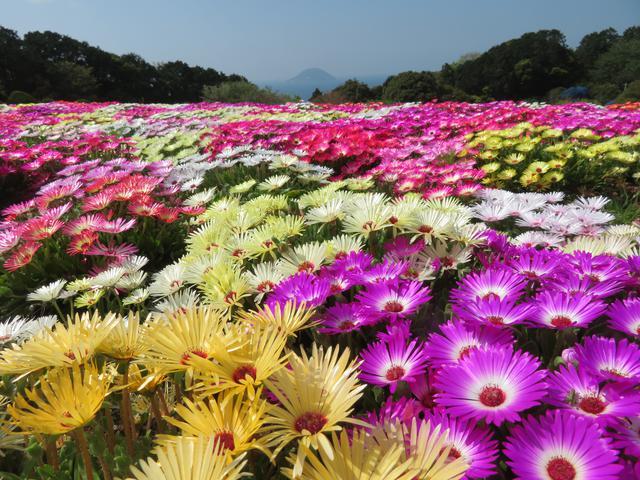 画像4: 【福岡】絶景・癒し・文化体験が勢揃い。「のこのしまアイランドパーク」で春の花に埋もれる