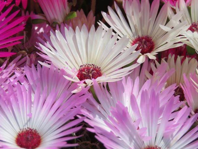 画像2: 【福岡】絶景・癒し・文化体験が勢揃い。「のこのしまアイランドパーク」で春の花に埋もれる