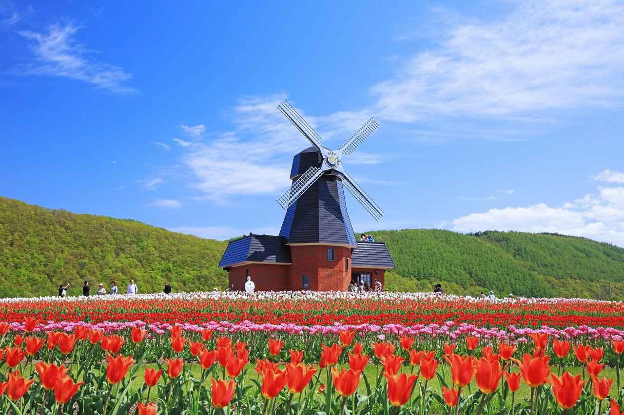 画像3: 【北海道】およそ200品種70万本を植栽。「かみゆうべつチューリップ公園」で絶景と異国情緒を味わう