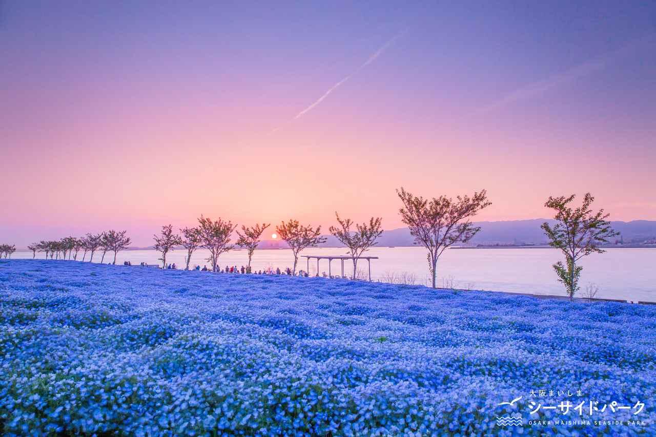 画像3: 【大阪】ネモフィラが作り出す青の世界。「大阪まいしまシーサイドパーク」で映え写真を撮る