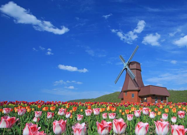 画像1: 【北海道】およそ200品種70万本を植栽。「かみゆうべつチューリップ公園」で絶景と異国情緒を味わう