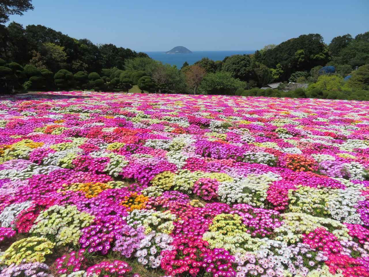 画像3: 【福岡】絶景・癒し・文化体験が勢揃い。「のこのしまアイランドパーク」で春の花に埋もれる