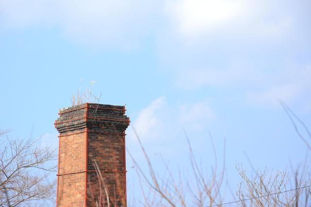 画像: もう使われていないレンガの煙突の上には、草木が生えていました