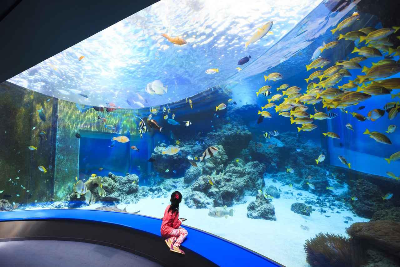 画像3: 「沖縄美ら海水族館」で、オリジナルマスクをゲット