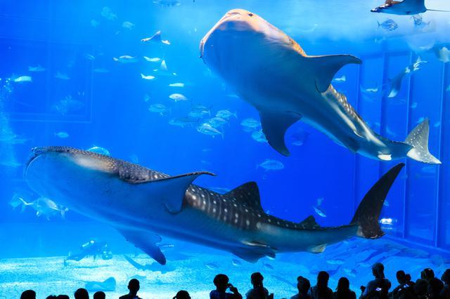 画像6: 「沖縄美ら海水族館」で、オリジナルマスクをゲット