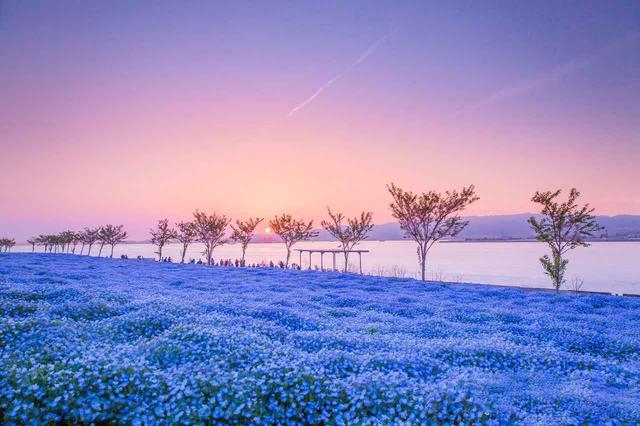 """画像: 春限定!""""花の絨毯""""で美しさに磨きがかかる、絶景スポット4選"""