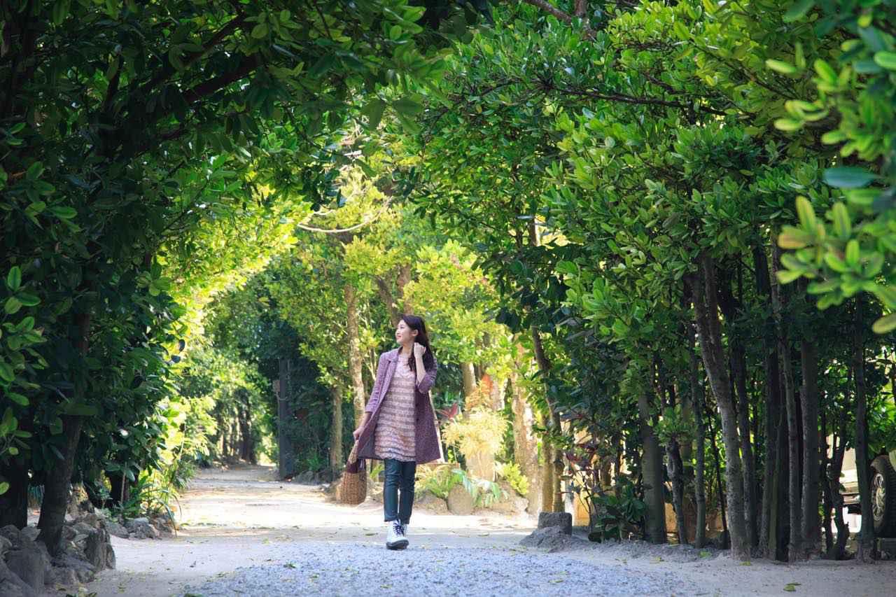 画像1: 「備瀬のフクギ並木」で、散歩をしながらグリーンシャワーを浴びよう