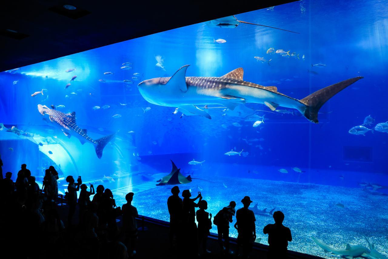 画像5: 「沖縄美ら海水族館」で、オリジナルマスクをゲット