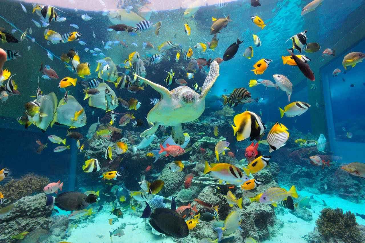 画像4: 「沖縄美ら海水族館」で、オリジナルマスクをゲット