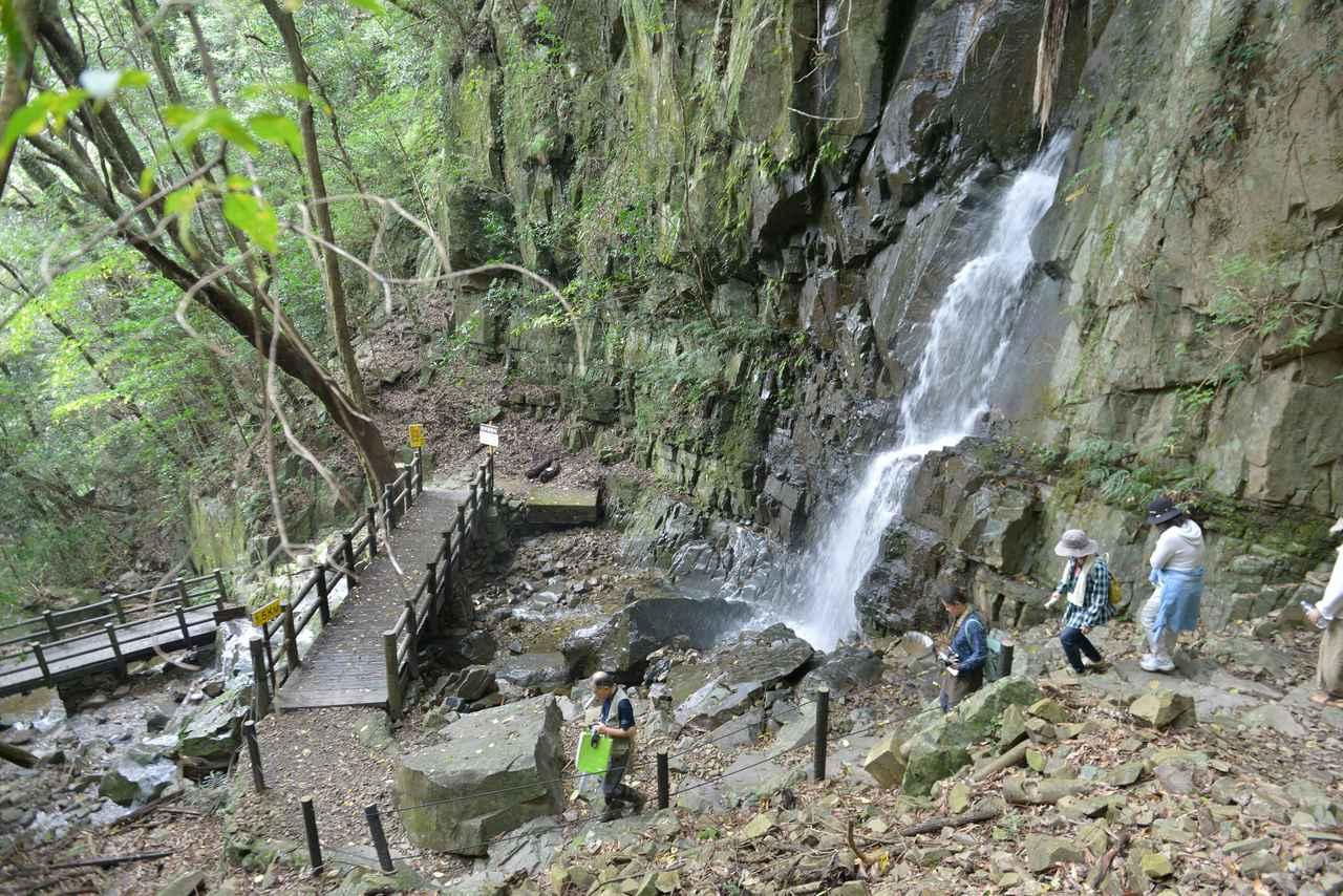 画像3: 【休日】ユネスコエコパーク認定の綾の照葉樹林を渡る|照葉大吊橋(綾町)