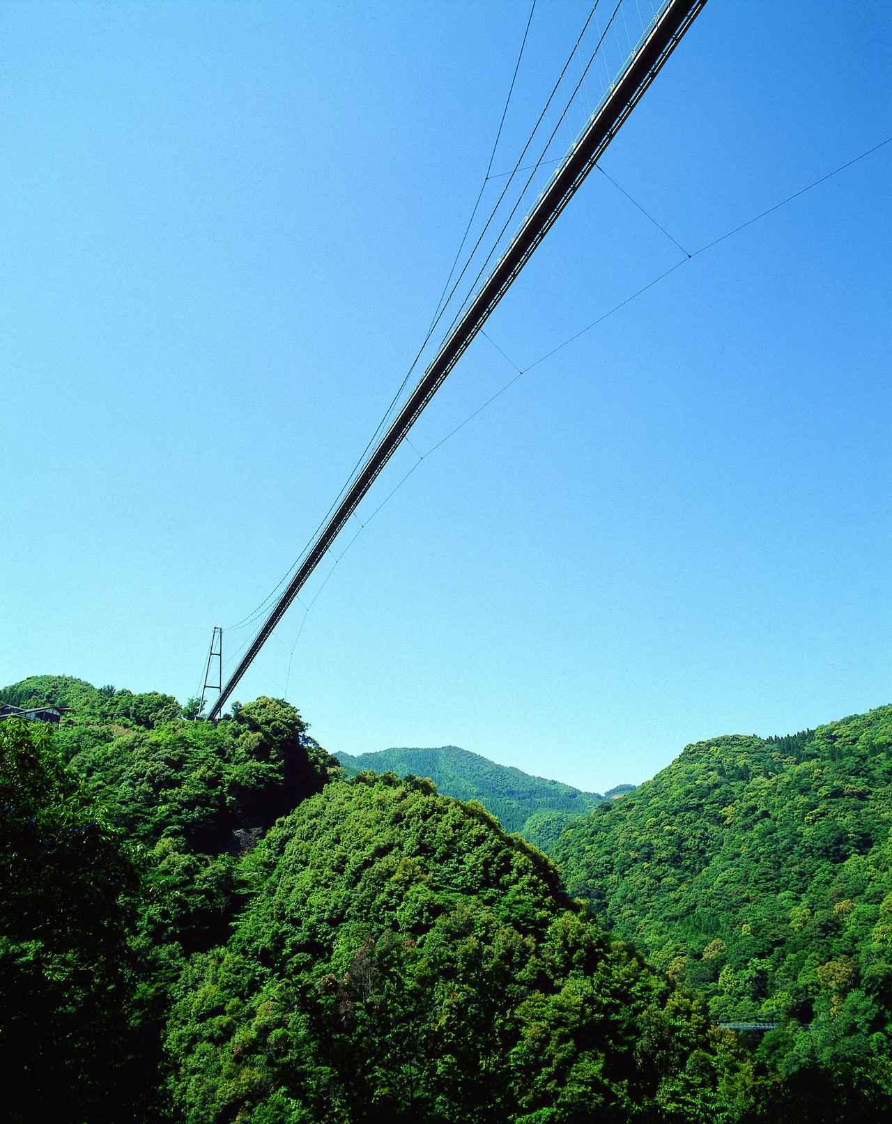 画像1: 【休日】ユネスコエコパーク認定の綾の照葉樹林を渡る|照葉大吊橋(綾町)