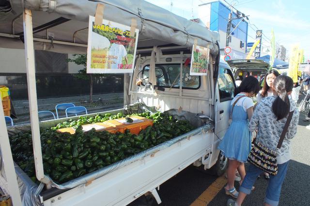 画像3: 【休日】日本一の規模を誇る「定期朝市」トロントロン軽トラ市も|トロントロンドーム(川南町)
