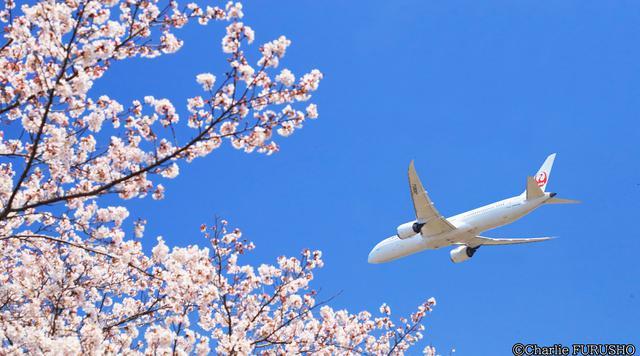 """画像: パイロットだけが知っている、日本""""上空""""お花見&絶景スポット8選"""