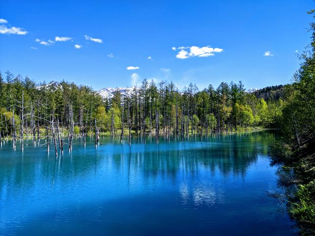画像: 11:20 美瑛エリア「白金青い池」で神秘的な風景に圧倒される