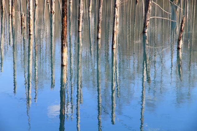 画像35: 【旭川空港発着】2泊3日で新緑の旭川エリアを楽しみ尽くすモデルコース