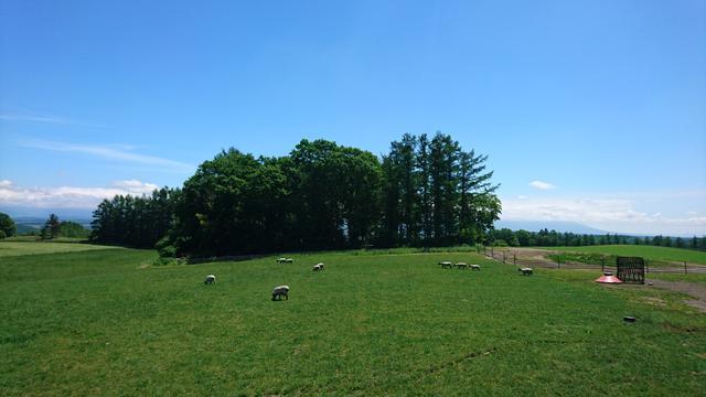 画像: 13:30 丘のさんぽ道 「ジェラート工房丘のミルジェ」で美瑛の丘を望みながらひんやりスイーツを