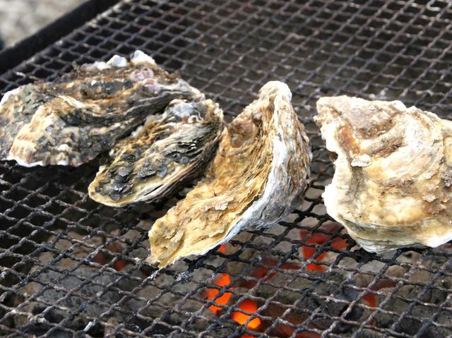 画像: 万石浦産活牡蠣。海中では岩のように塊になっていて、寺岡さんが丁寧に外す