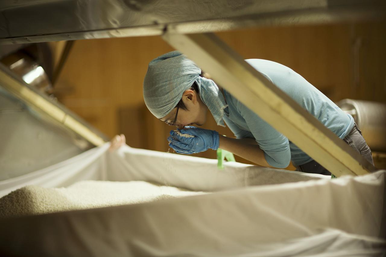 画像: 姉の麻衣子さん。麹の生育状態を確認している