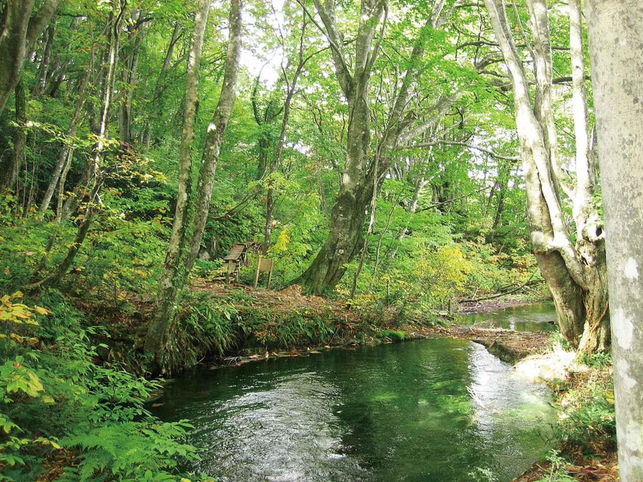 画像: 【絶景⑤】ジブリの森のような「獅子ヶ鼻湿原」で避暑体験(にかほ市)