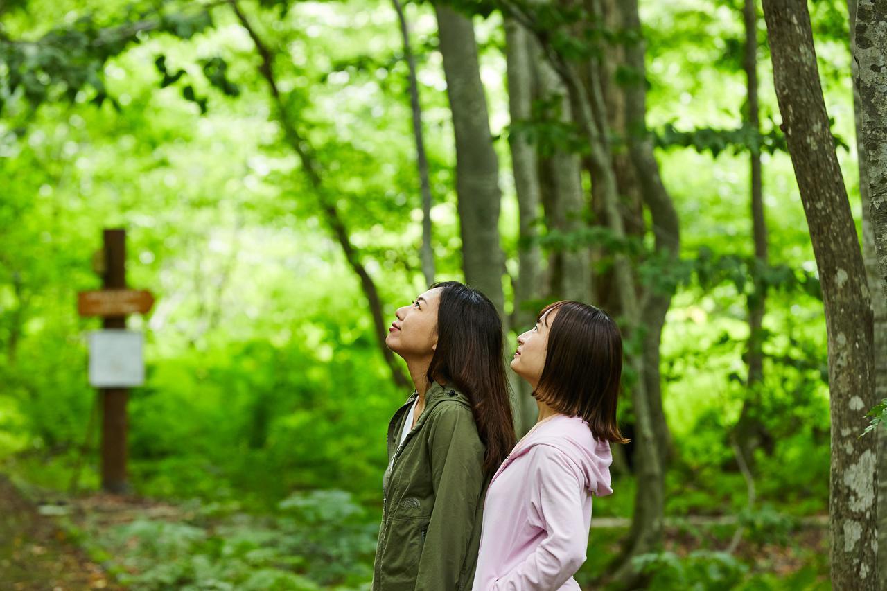 画像: 世界自然遺産、白神山地の森に癒される。秋田の自然をめぐる旅 -県北・藤里編-