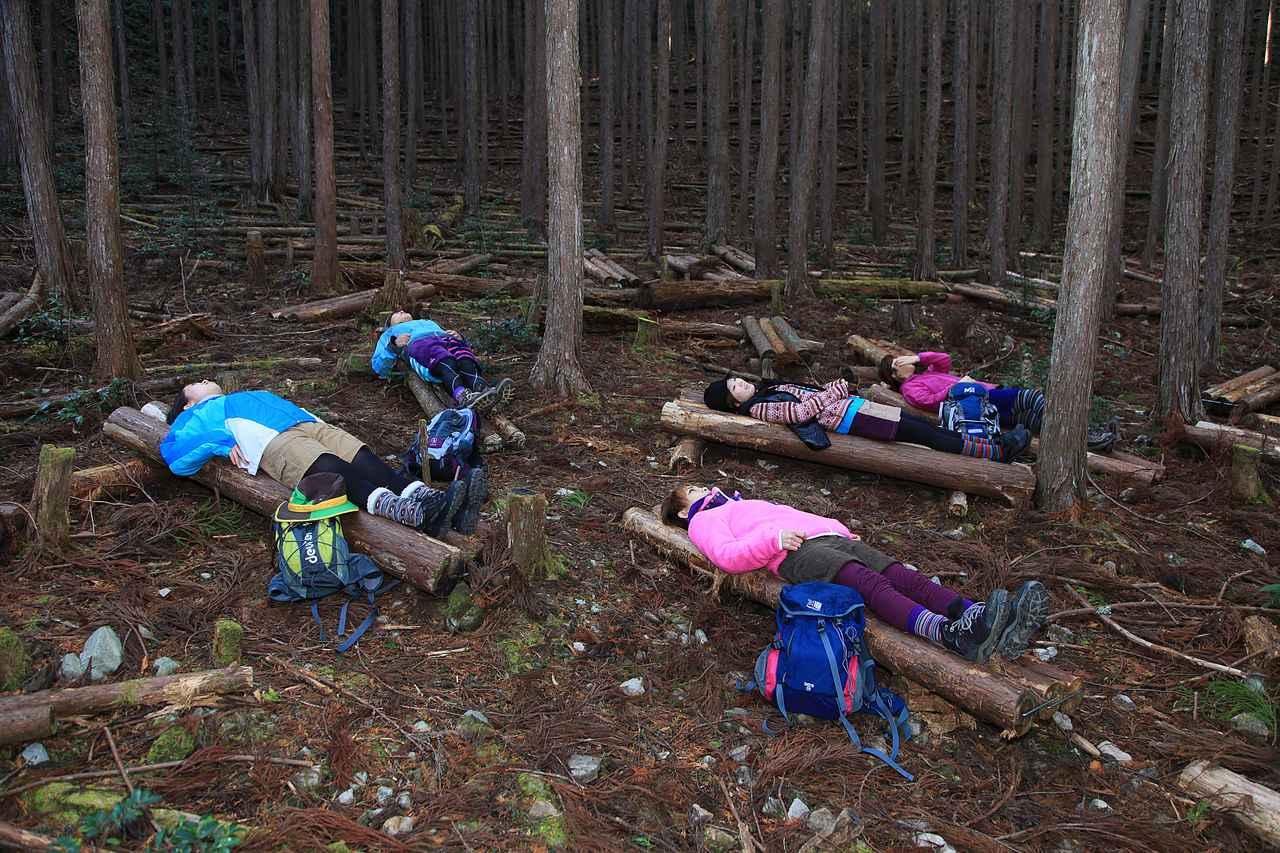画像3: パワースポット・熊野古道で森林浴