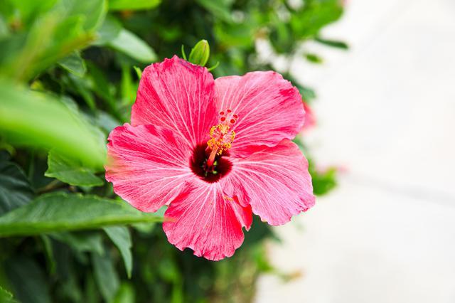 画像3: 気軽に南国気分を! 沖縄をハワイアンスタイルで楽しむ家族旅行はいかがですか?