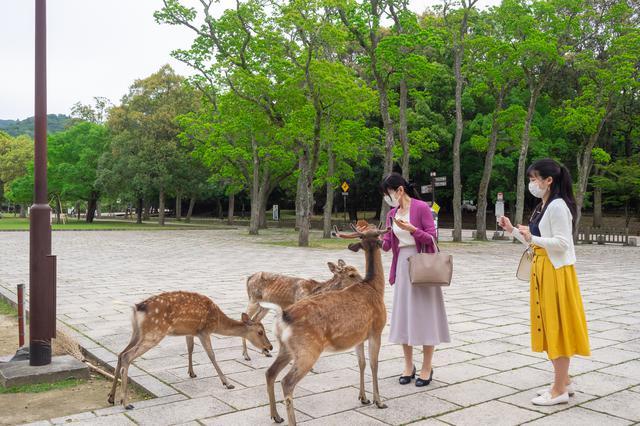 画像2: 奈良公園で「浮見堂」などを巡りながら母娘で過ごす時間