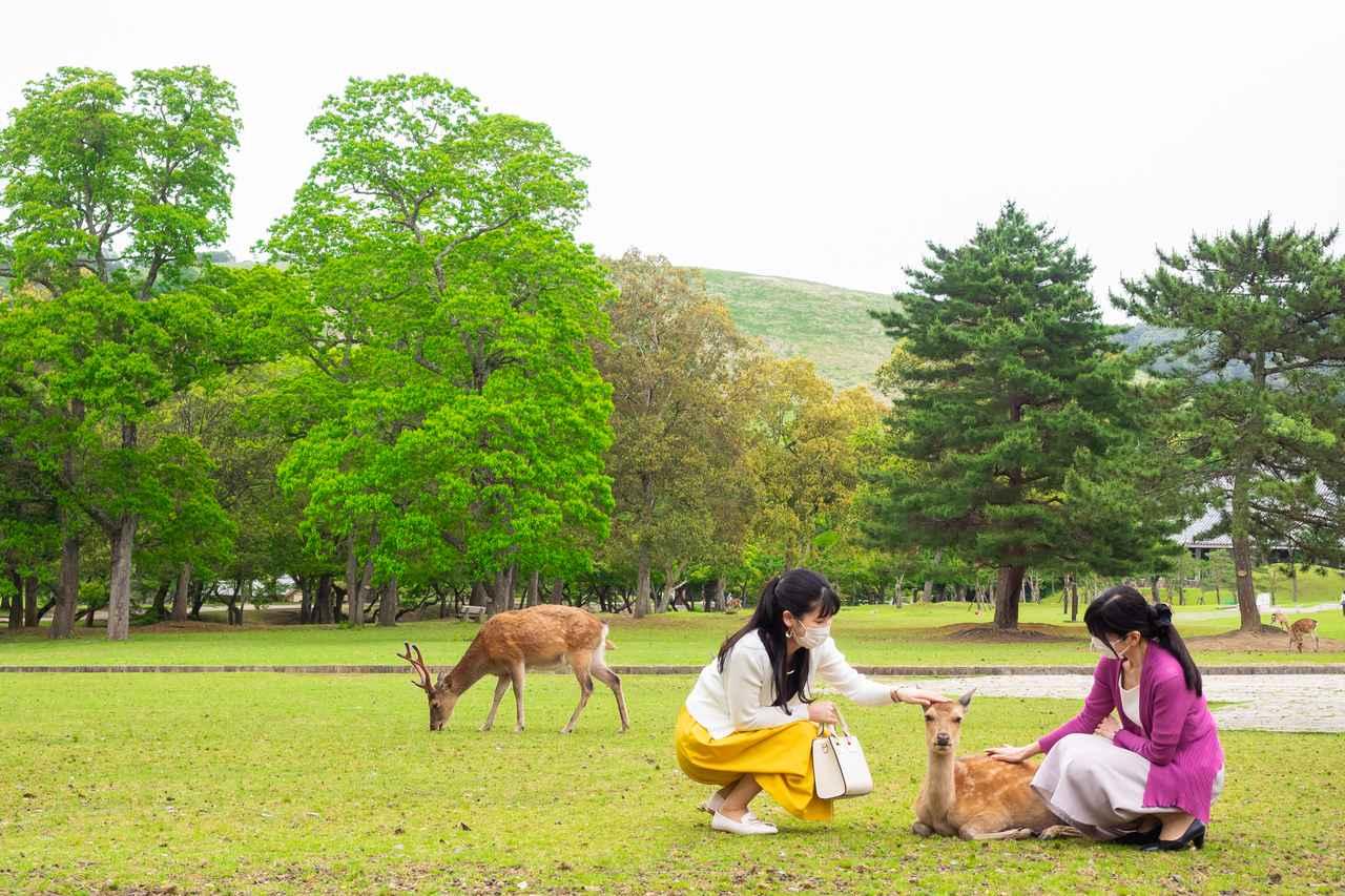 画像1: JALカードの「マイル旅」:週末の奈良で、距離が縮まる母娘旅編