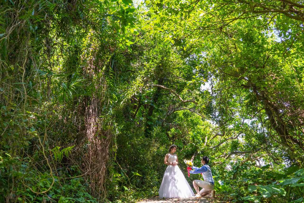 画像: タコ公園:緑のトンネルを抜けた先には、青い海を望めるスポットも