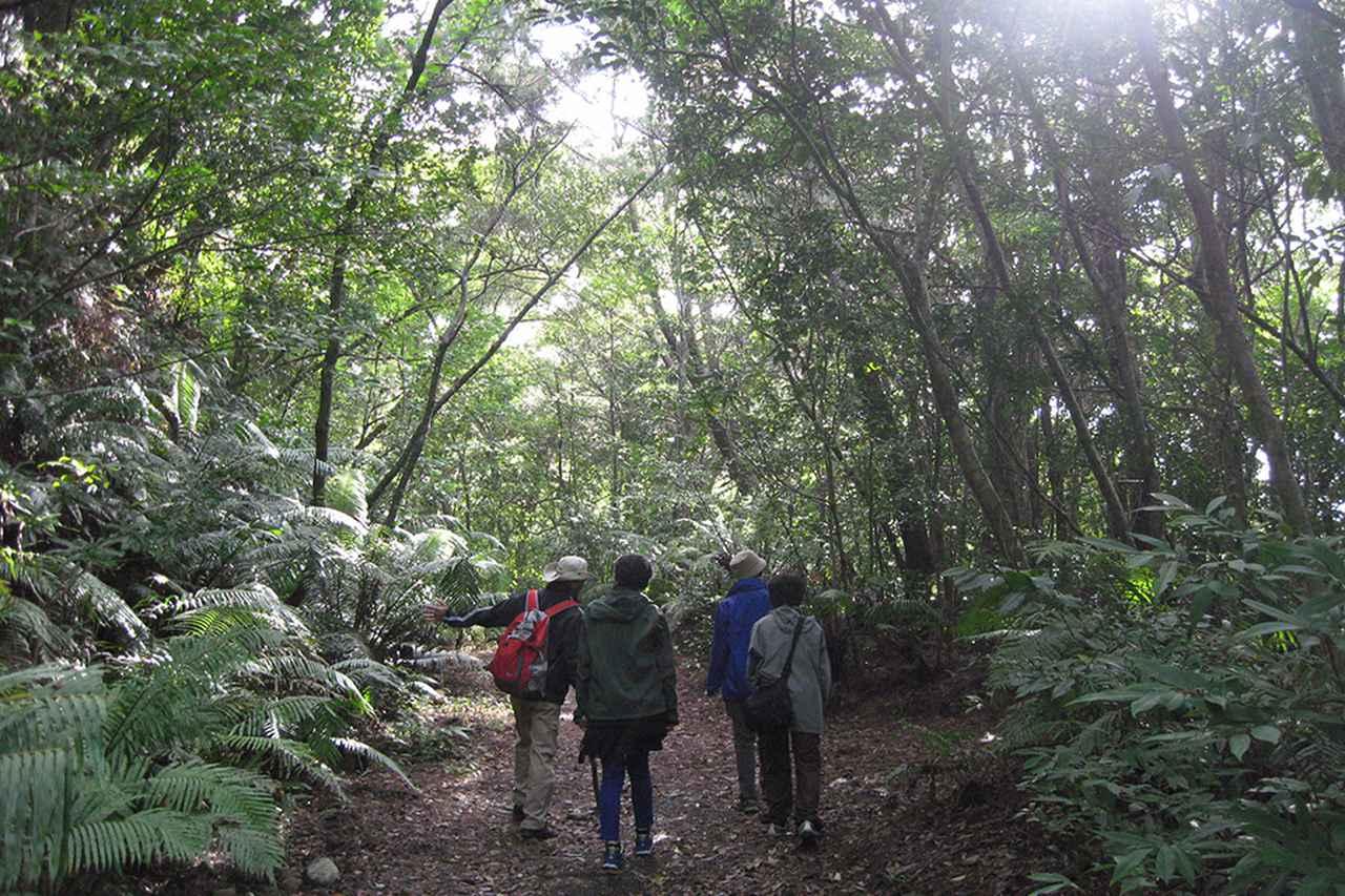 画像: 【体験ツアー】マイナスイオンの癒やし。4つのコースから選べる「森林セラピー」