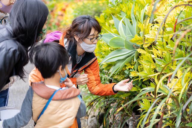 画像: Photo: Endemic Garden H