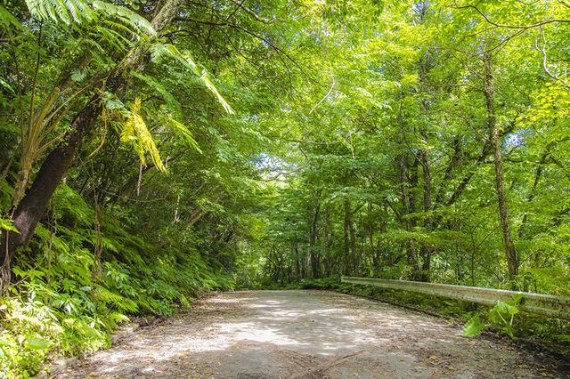 画像: 上開地さんがネイチャーツアーで案内する大国林道