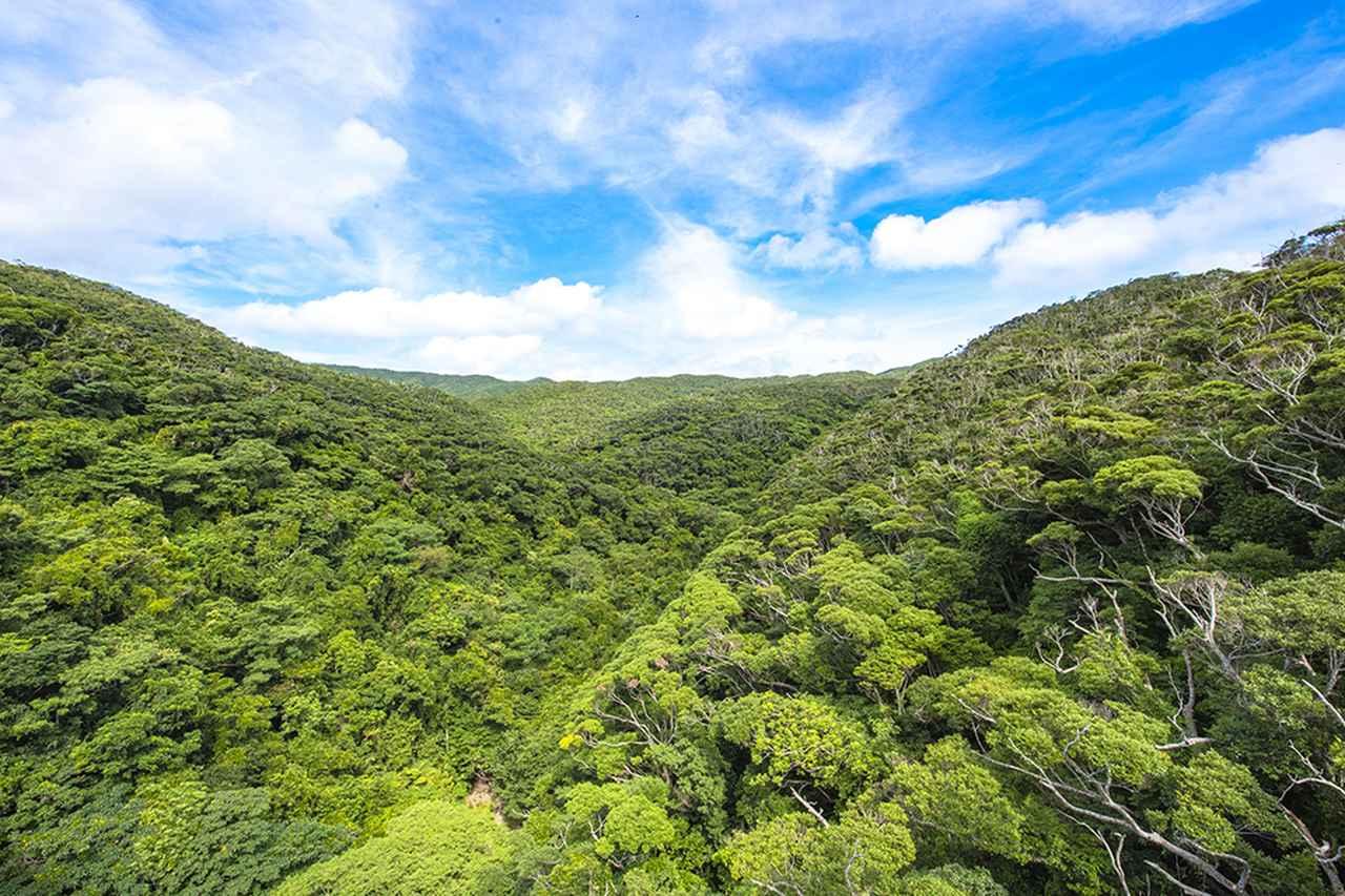 画像: 「自然のなかで暮らす」を体感できる国頭村のおすすめスポット&アクティビティ
