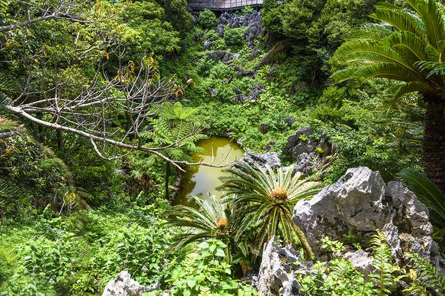 画像: 大石林山