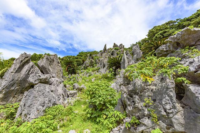 画像1: 【散策】壮大な熱帯カルスト地形に圧倒される「大石林山」