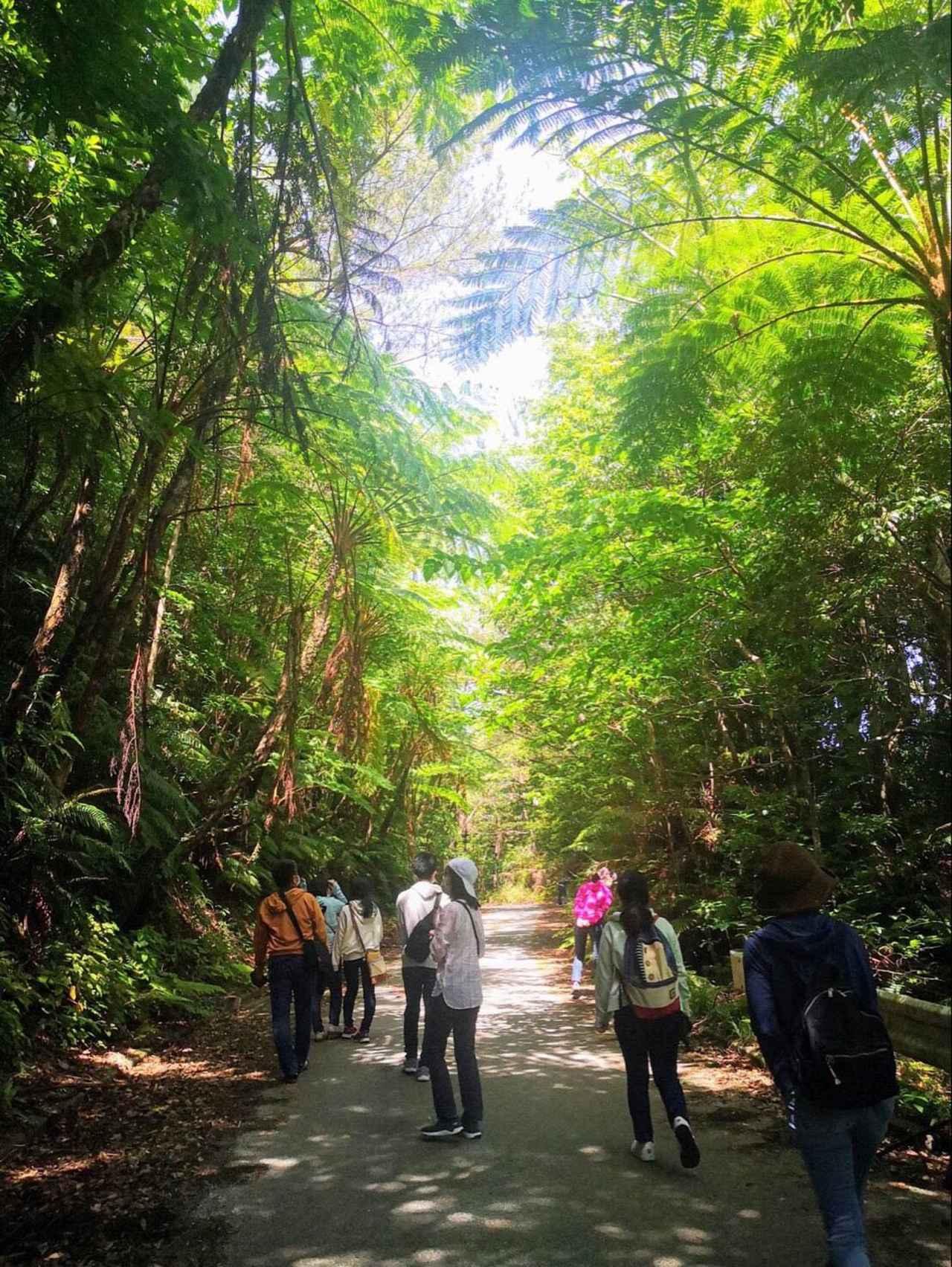 画像3: 奄美大島、徳之島、沖縄島北部、西表島が世界遺産登録。今こそ日本古来の自然と向き合う旅へ