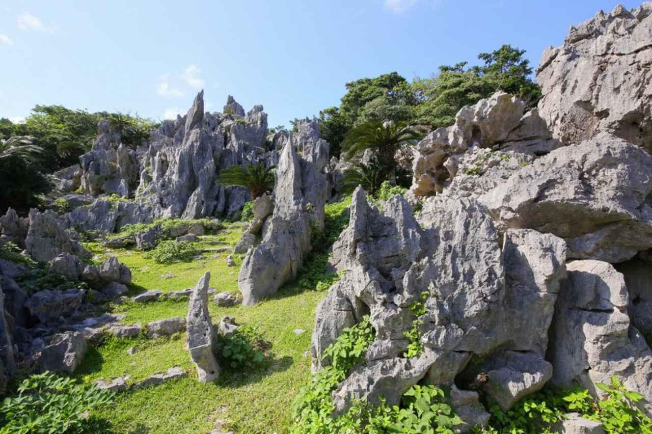 画像: 【自然】「大石林山」で世界最北端の熱帯カルスト地形を眼前に
