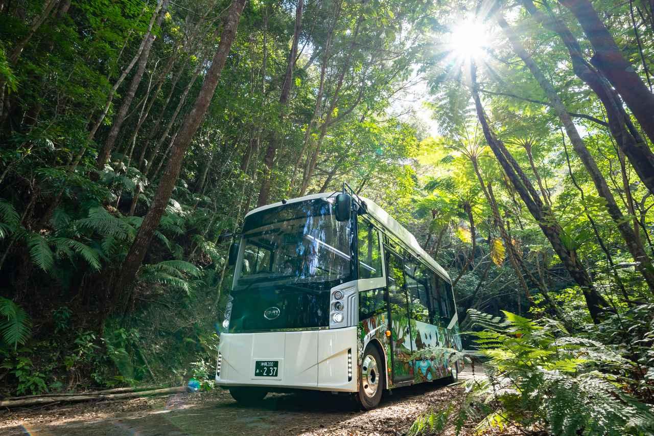画像2: 奄美大島、徳之島、沖縄島北部、西表島が世界遺産登録。今こそ日本古来の自然と向き合う旅へ